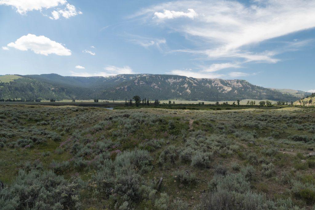 La sublime Lamar Valley