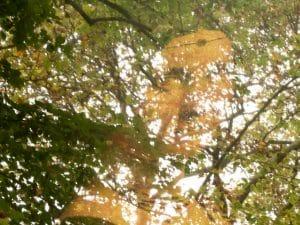 toiles suspendues dans le parc du clos lucé