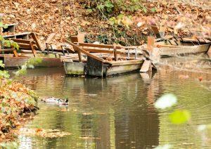 barque dans le parc du clos lucé