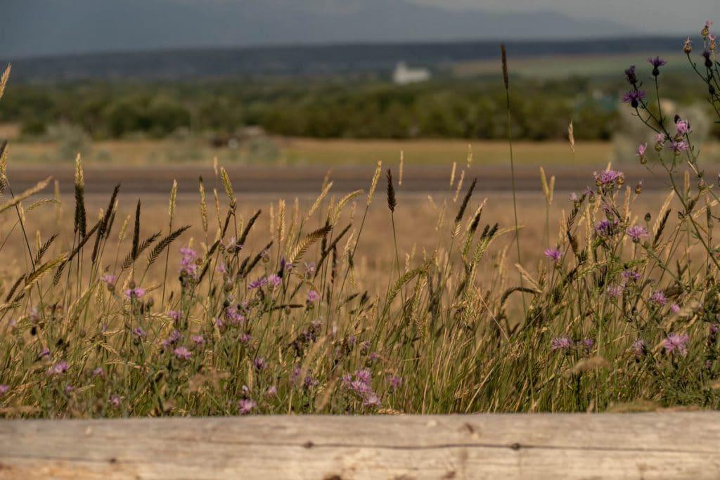 fleurs-three-forks-montana